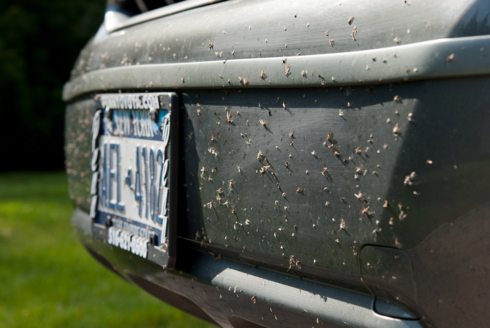 Removing insects