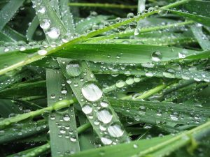 Water droplets on a hydrophobic leafs